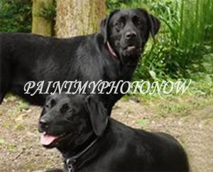 Two black dogs merged