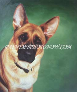 Dog portrait from photograph