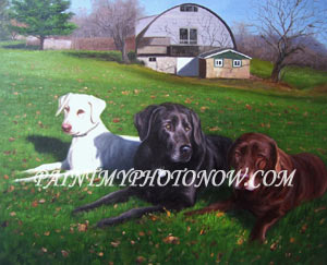 Three dogs laying in lawn
