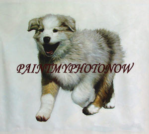 Dog portrait with plain background