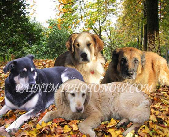 Merged photo of four dogs